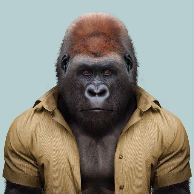 just Gorilla
