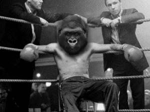 'We got you' Gorilla